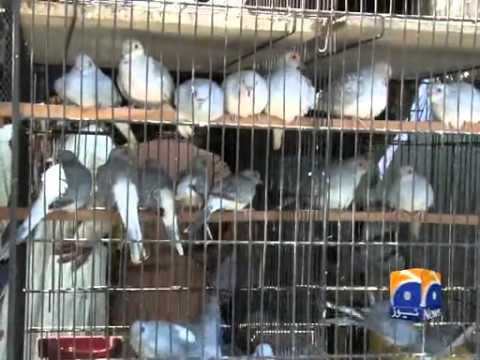 Birds Business in Pakistan 14 April 2014