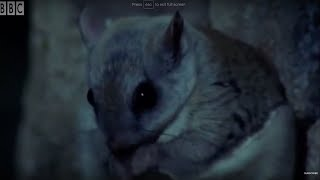 Attenborough: Is it a Bird? Is it a plane? Is it a flying squirrel? - BBC Earth
