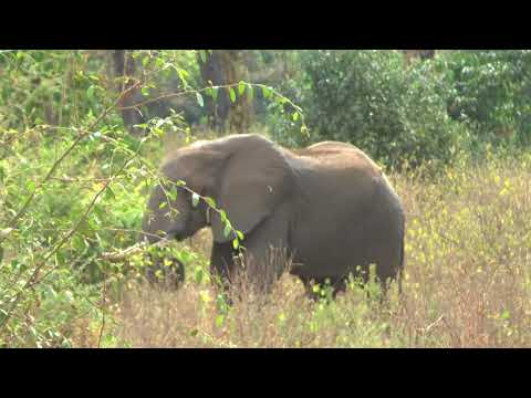 SAFARI TANZANIA 2016. puntata 2 Lake Manyara