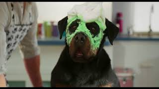 Show Dogs 2018 Trailer