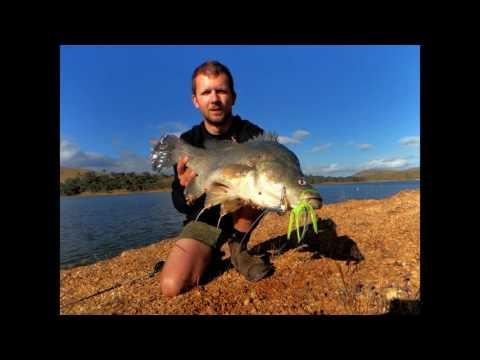 Spinnerbait Yellowbelly Action - Lake Eildon Fishing