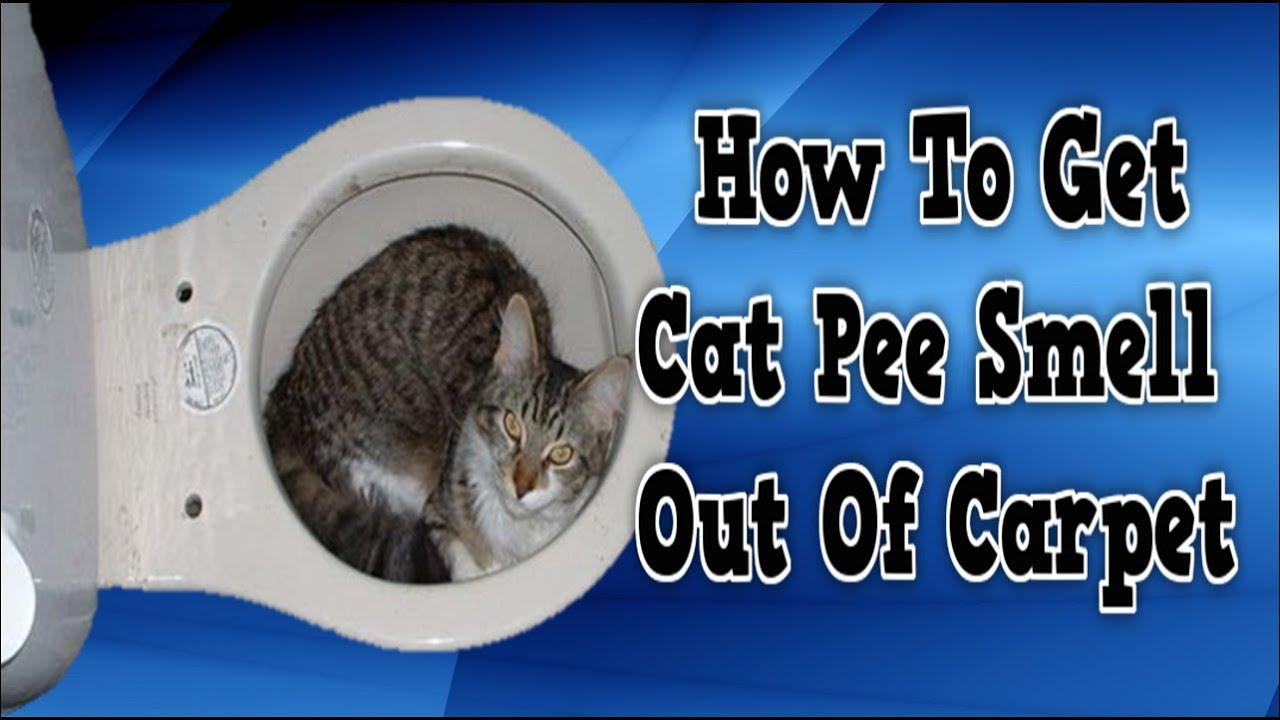 Cat Urine Smell Linoleum Adb Coin News