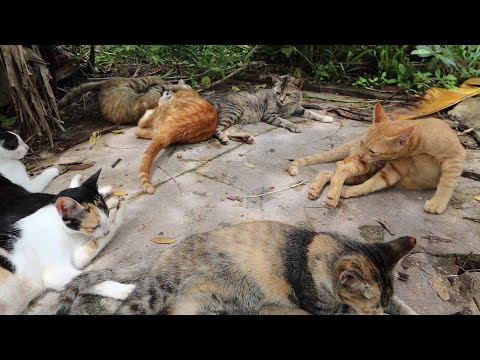 Cute cat cleaning time | cat video meowing | the gohan dog and cat