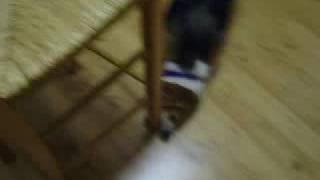Lol My Stupid Dog Fighting A Chair