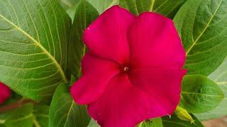 Onze Plantas Para Cultivar Em Varandas Ou Sacadas