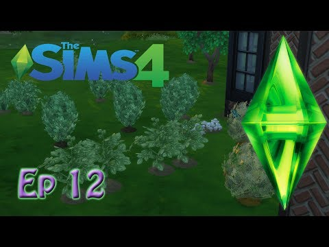 Ep 12: Cleaning up the garden!  A Sims 4 Letsplay