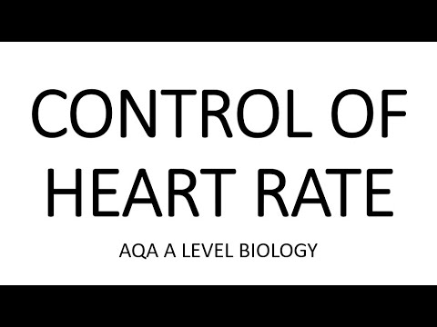 CONTROL OF HEART RATE - AQA A LEVEL BIOLOGY + EXAM ...