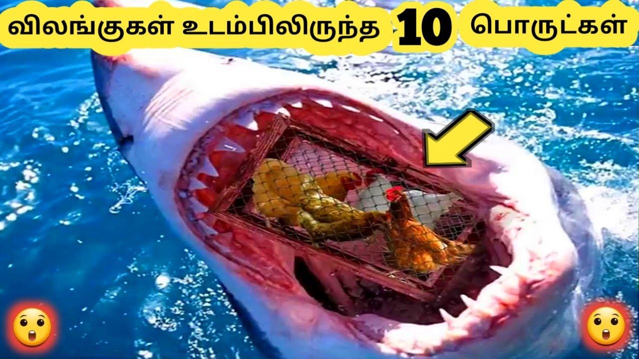 ஆச்சரியமான விலங்குகள் || Ten Amazing animal || Tamil Galatta News