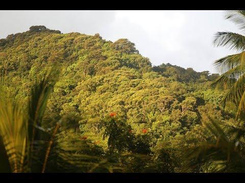Real Dominica (11min) 2017