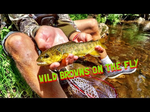 Arizona Fly Fishing Secret Creek
