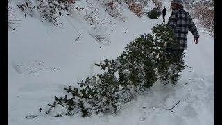 Christmas Tree Hunting Tradition! Firebox Stove Hot Chocolate & Sausages!