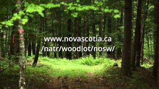 Siliviculture