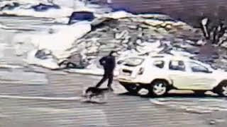 Брошенная собака отчаянно бежит за машиной хозяина