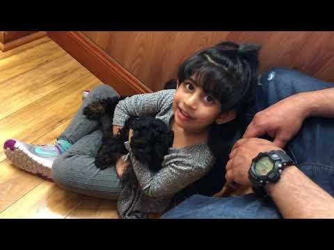 Shih Tzu puppy playin with kids small dog breeds