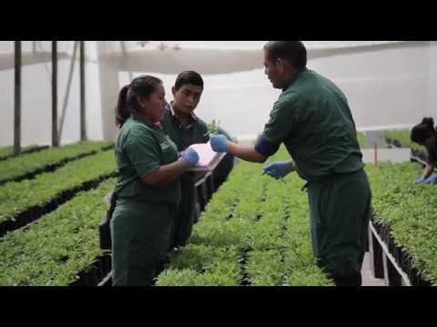 Guatemala Stock Farm Tours