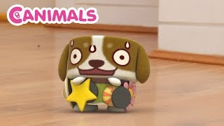Canimals | MAGNET SURPRISE | NEW Compilation | Cartoons for kids