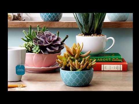 Home decor indoor house plant decoration ideas| best house air plants gardening