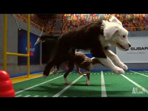 Ginger's String of Penalties | Puppy Bowl X