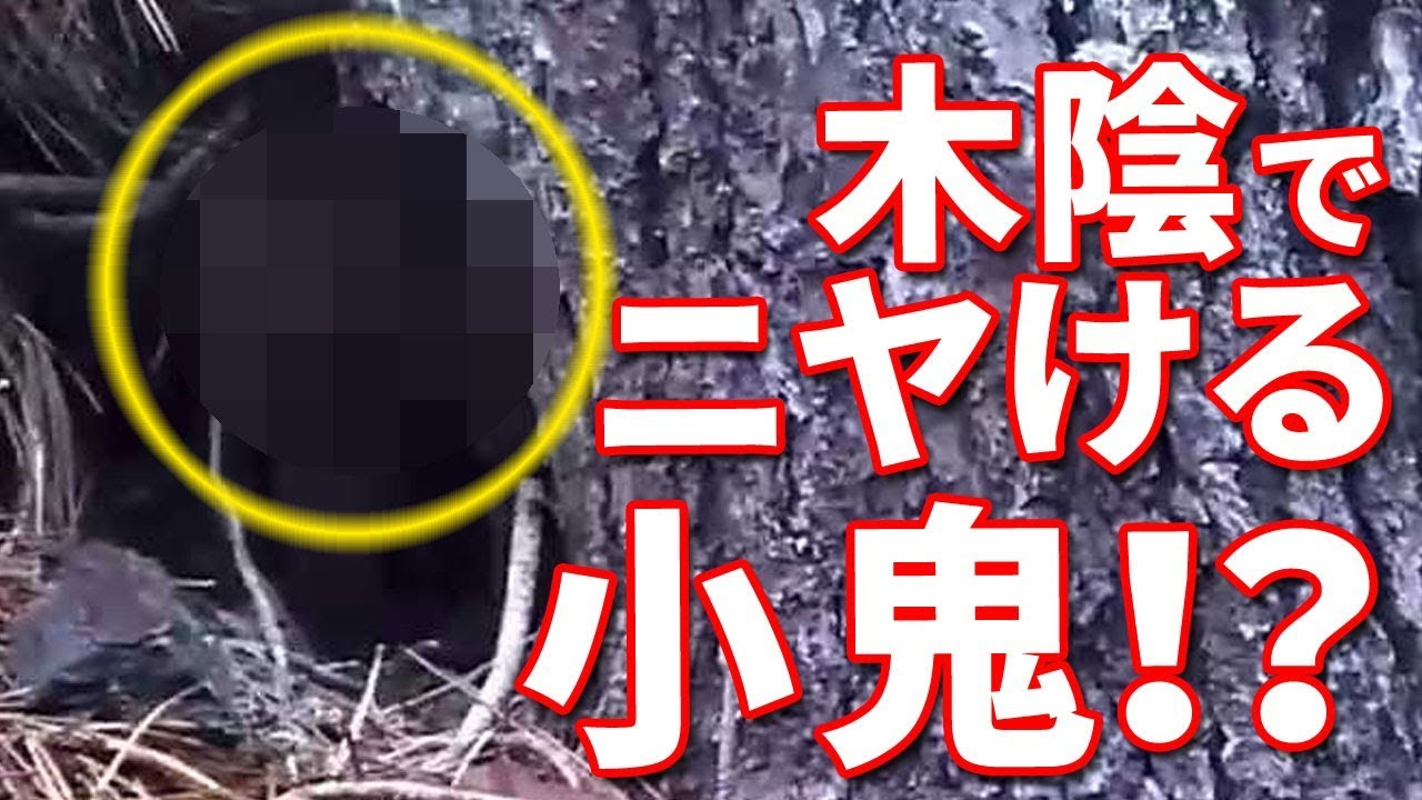 「ゴブリン」が木陰に隠れている姿の衝撃動画!