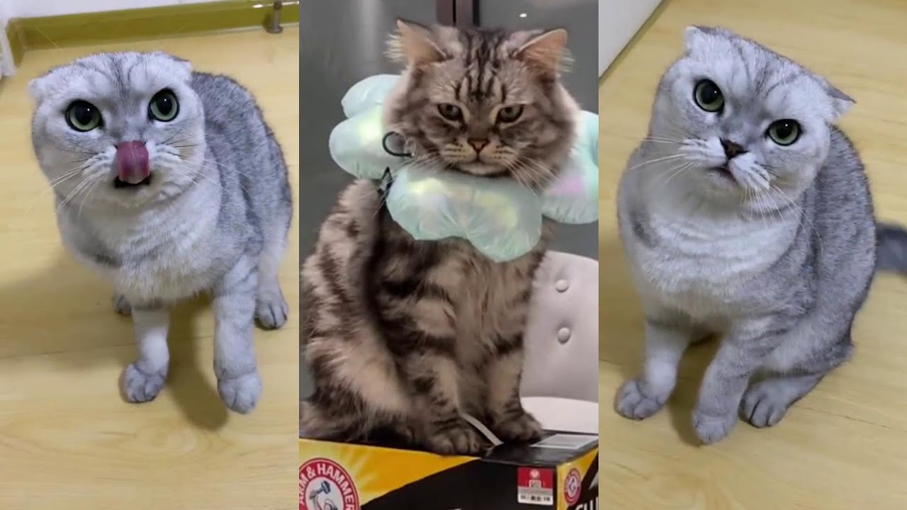 【猫の鳴き声】いたずら猫、猫とのリラックスしたひととき