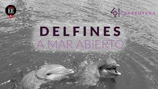 Día catorce de cuarentena en Colombia: así viven los delfines del acuario de Santa Marta