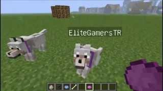 Minecraft 'ta 30 level Büyü masası yapımı ve Köpege isim verme,Tasmasının rengini degistirme
