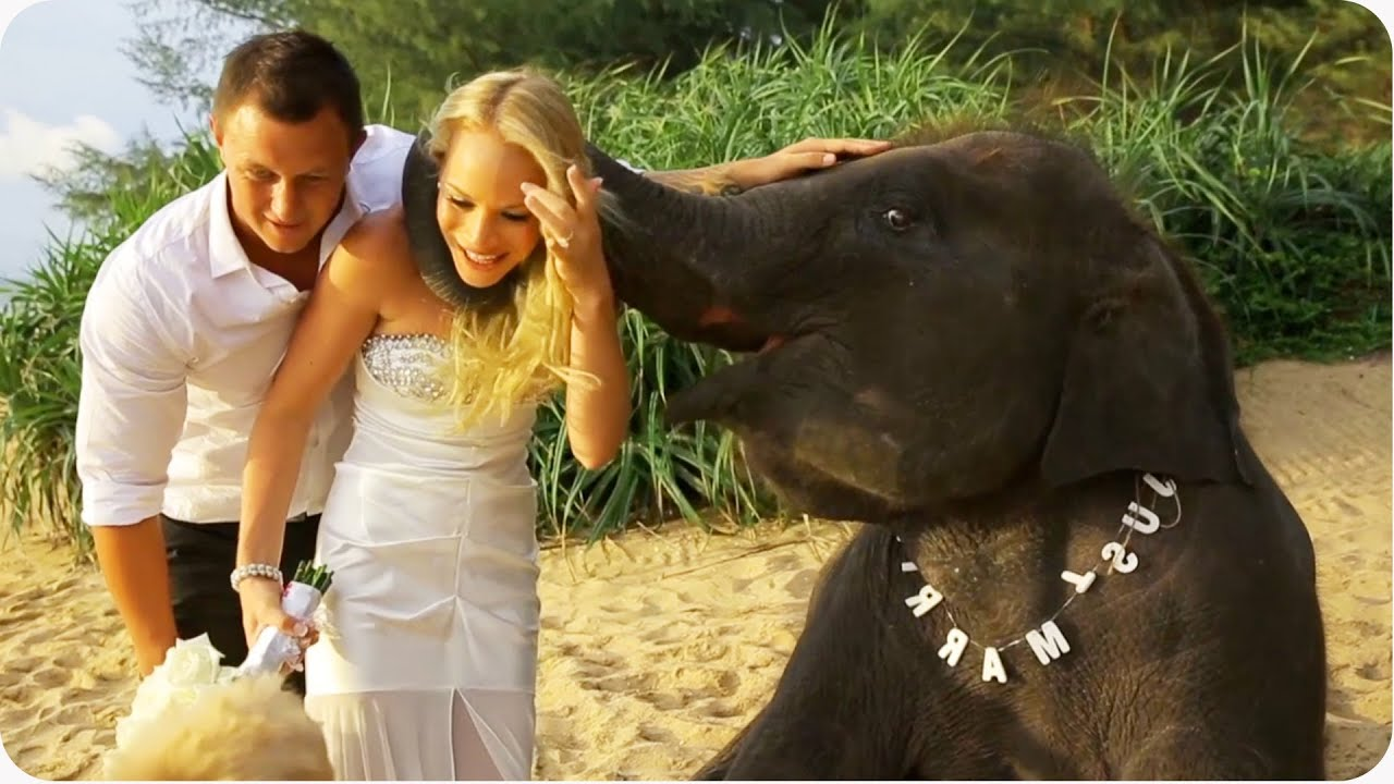 Baby Elephant Likes Wedding Party