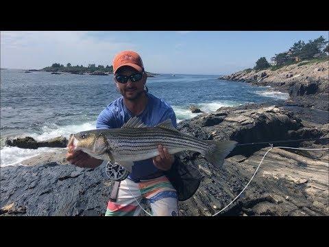 Bailey Island Striper Fishing