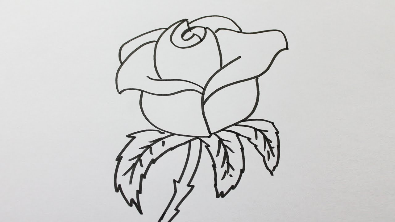 Comment dessiner une rose facilement youtube - Dessins a dessiner facile ...