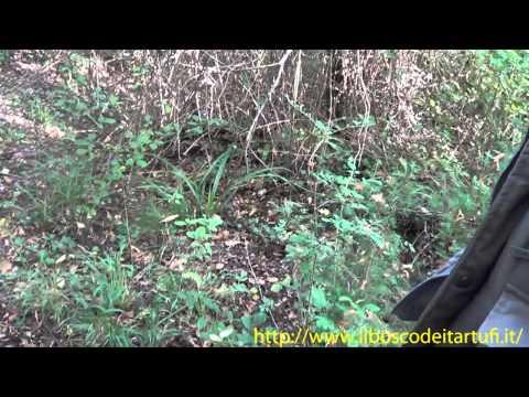 Ugo Santoni parla dell'ambiente della tartufaia