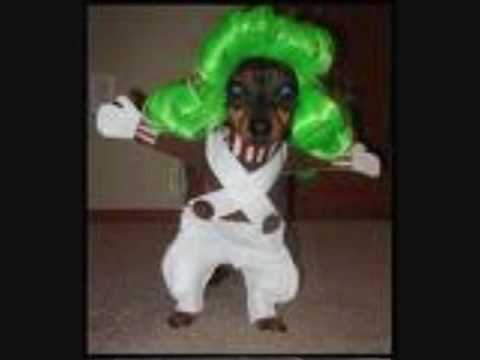 funny dog costumes youtube. Black Bedroom Furniture Sets. Home Design Ideas
