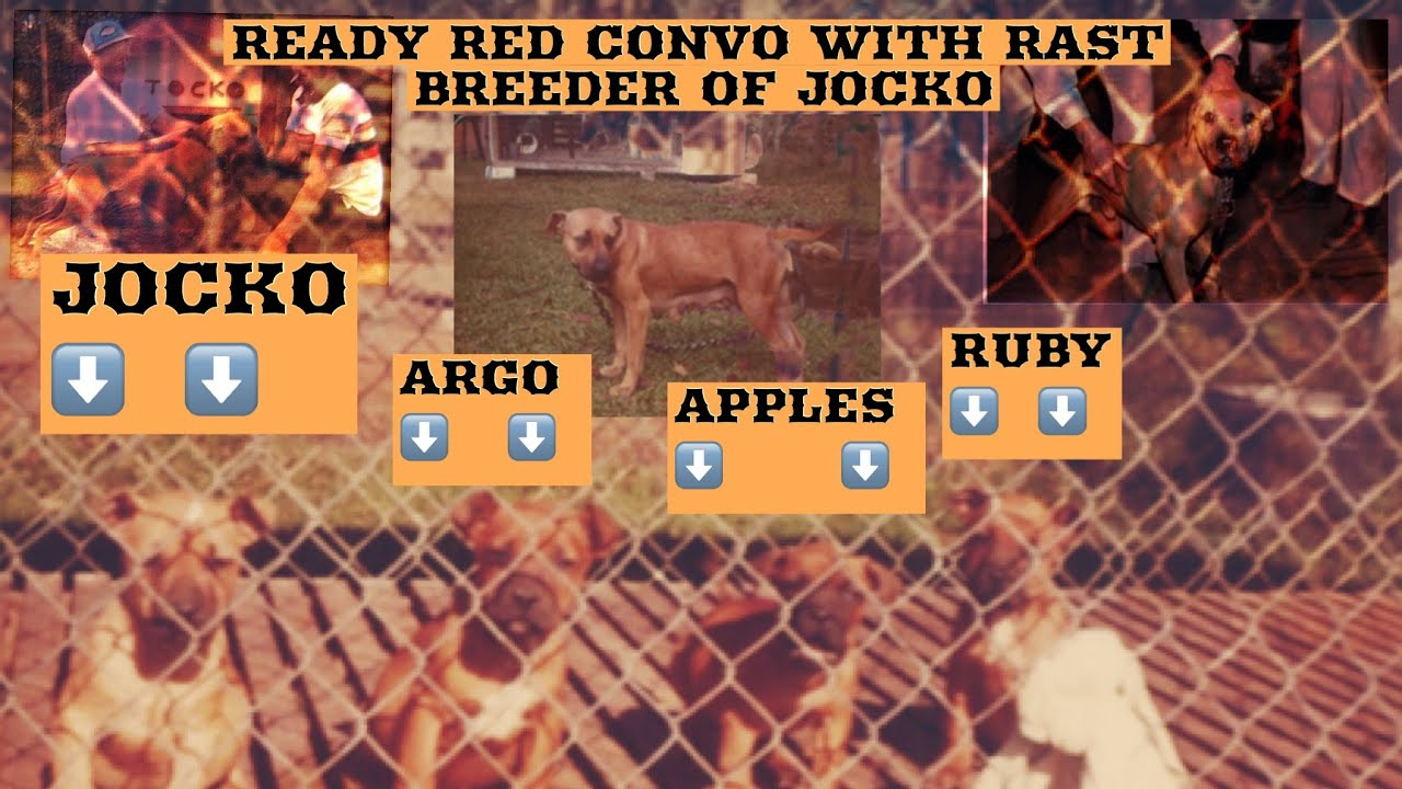 Puppies - Ready Red Kennels