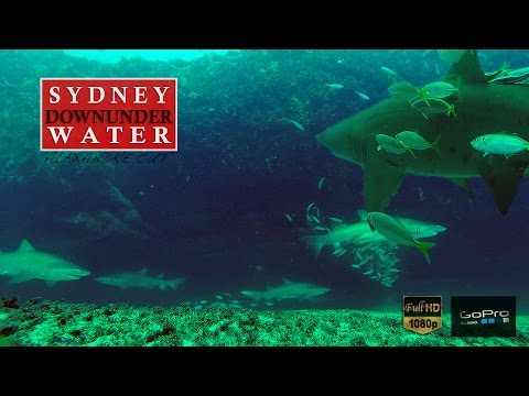 ★ SYDNEY UNDERWATER ★ - snorkeling with sand tiger Sharks, giant cuttlefish, sea dragon and more-