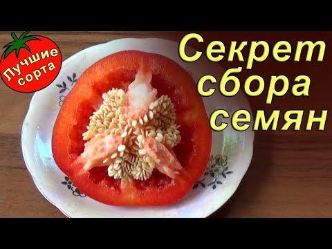 Как взять семена из перца