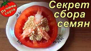 видео получение семян перца
