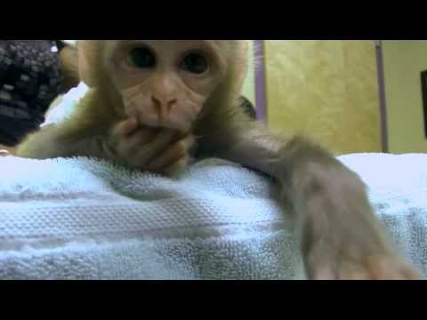 Macaque Attack (of Cuteness!) - Exotic Pet Vet