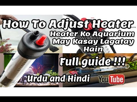 How To Adjust Heater | In Fish Tank | Informative Video!!! Urdu And Hindi