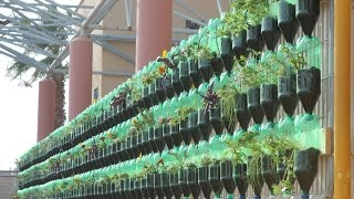 The Green Wall - Educational Vertical Garden Bottle System Project