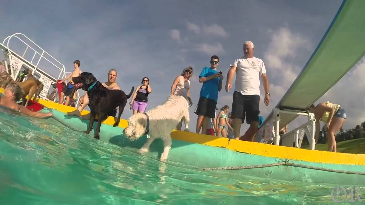 Mineral Beach Dog Swim