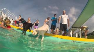 GoPro View: Dog Swim at Mineral Beach