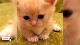 Cute Kittens & Newborn Meowing and Playing - Funny Baby Cats 2019