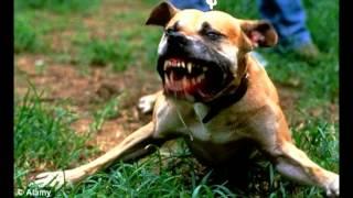 Top 10 Aggressive Dog
