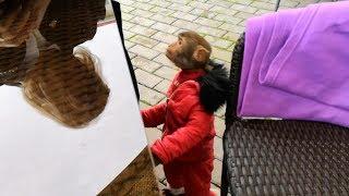 Приколы с животными обезьяна нашего городка братья наши меньшие !!!