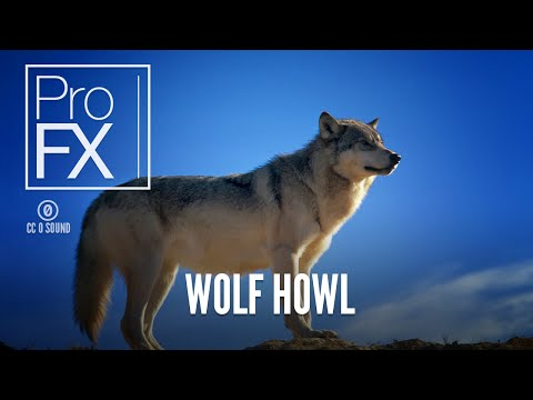 Wolf howl sound effect  ProFX Sound, Sound Effects, Free Sound Effects