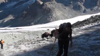 Caravane de yaks sur le Col de Collon