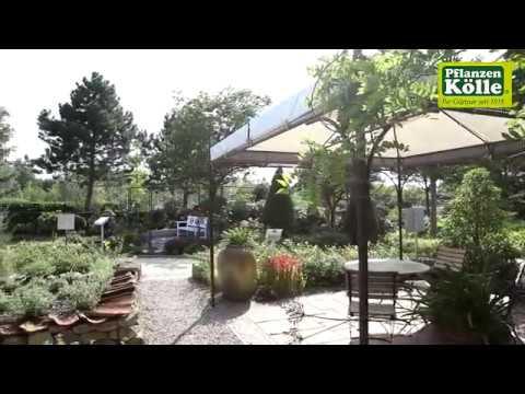 Gartengestaltung Mediterraner Garten I Pflanzen Kölle