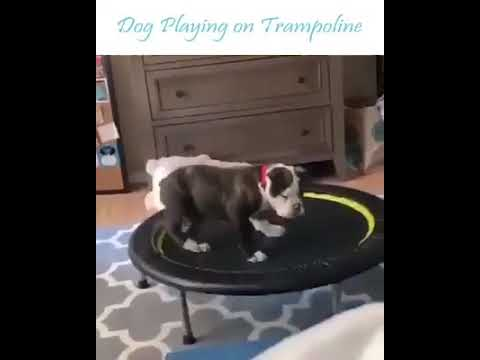Bought A New   Trampoline For My Dog And He Is Having A Great Fun