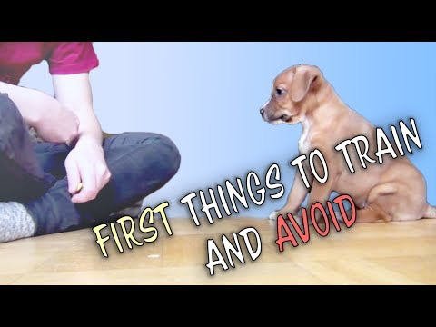 First things to train and to avoid - puppy dog training