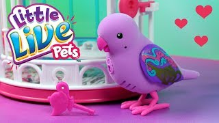 Little Live Pets • Sekretny Ptaszek w Klatce • Cobi • Unboxing