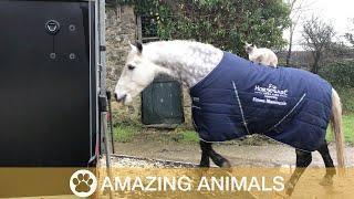 Horse-Riding Cat Treks Around Devon